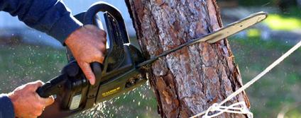 tree-service-atlanta